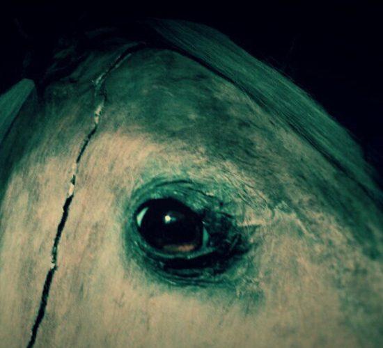Vizir-cheval-Napoleon
