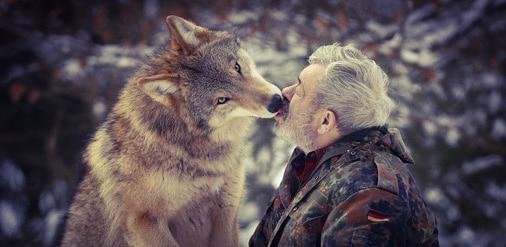 Loups-Lentz-loup-carré_impérial